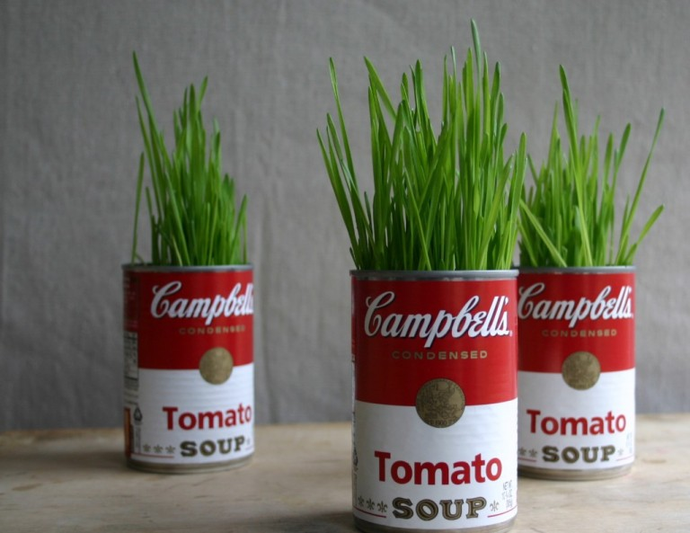 campbells soup cans hold wheatgrass