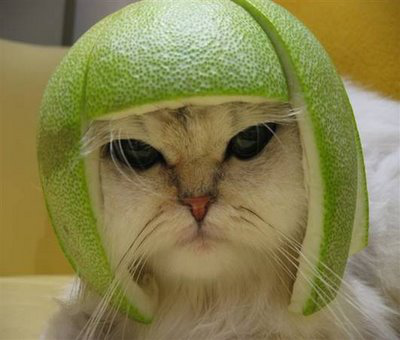 funny cat wearing a green avocado hat
