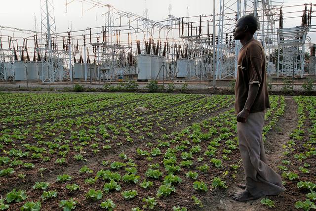an urban farmer in ghana